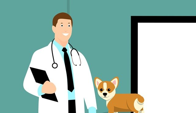 Vet Doctor Dog Puppy Canine